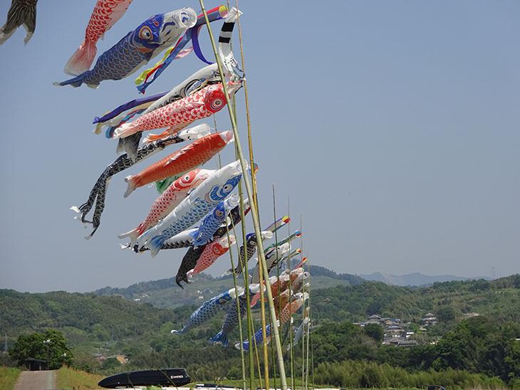 吉野川河川敷ではたくさんの鯉のぼりが上げられています