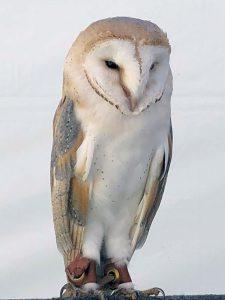 左端のフクロウの目が開いた!(テンションMAX)