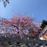 春めいて・・・☆