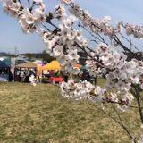 満開の桜と市内散策♪