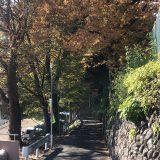 スタッフ林の街歩き日誌