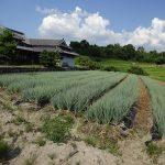 第42回 農業生産法人 株式会社五條市青ネギ生産組合 代表取締役 森本 茂仁さん